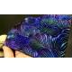 Ludmila Bakulina Texture Feathers