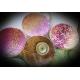 Écran VeroS Batik flower